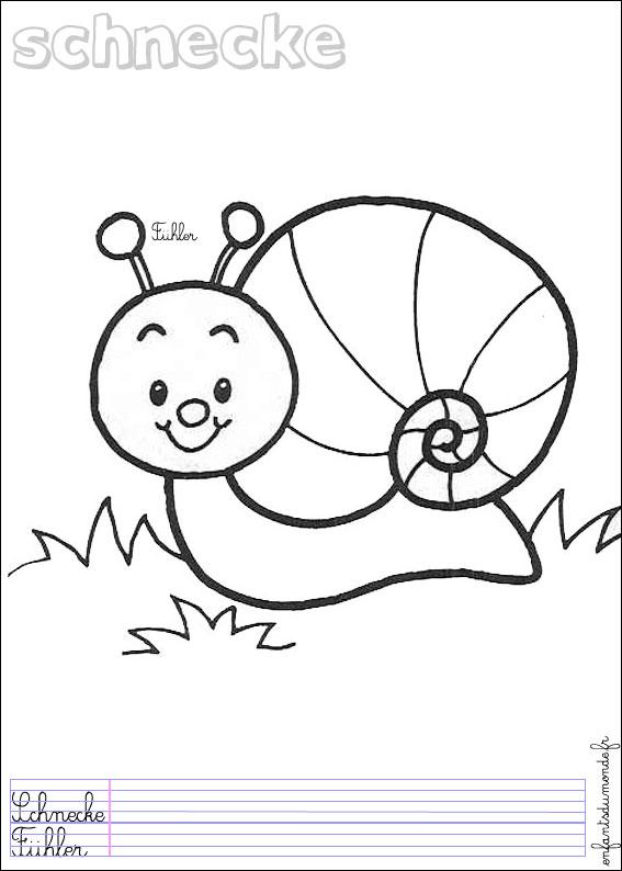 coloriage escargot 2 .:. Coloriages Animaux de la forêt en allemand