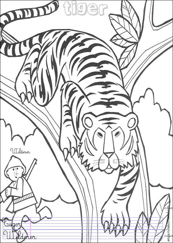 Coloriage tigre 1 coloriages animaux de la jungle en - Coloriage animaux jungle ...