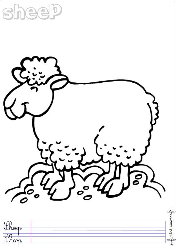 Coloriage Mouton 3 Coloriages Animaux De La Ferme En Anglais