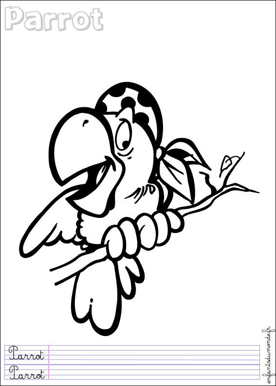 Coloriage Perroquet 2 Coloriages Oiseaux En Anglais