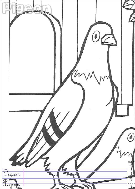 Coloriage pigeon 1 coloriages oiseaux en anglais - Voyageur dessin ...