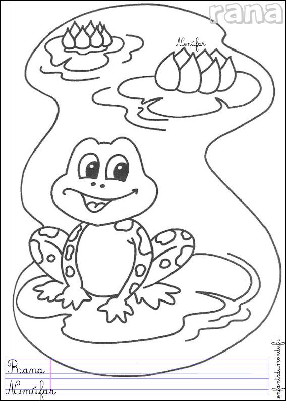 Dessin grenouille facile - Coloriage facile animaux ...