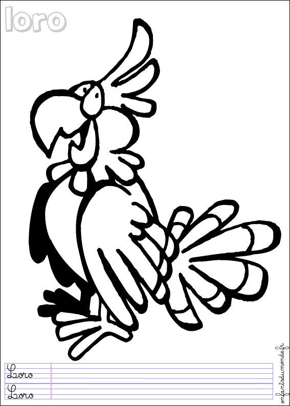 Oiseau a dessiner - Dessiner un perroquet ...