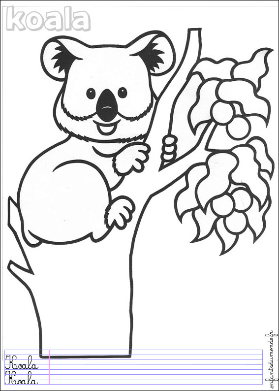 Coloriage koala 1 coloriages animaux de la jungle en - Coloriage animaux de la jungle ...