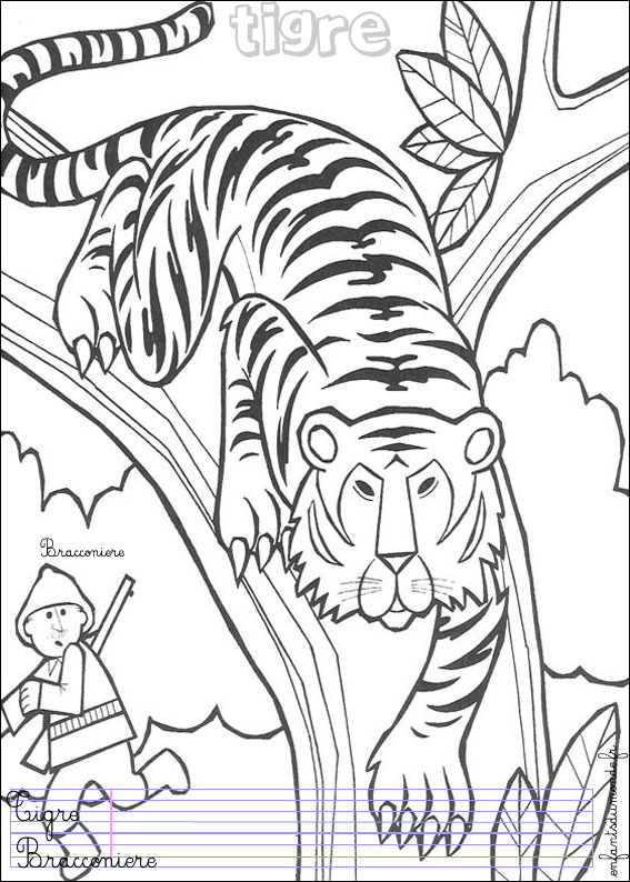 Coloriage Tigre 1 Coloriages Animaux De La Jungle En Italien