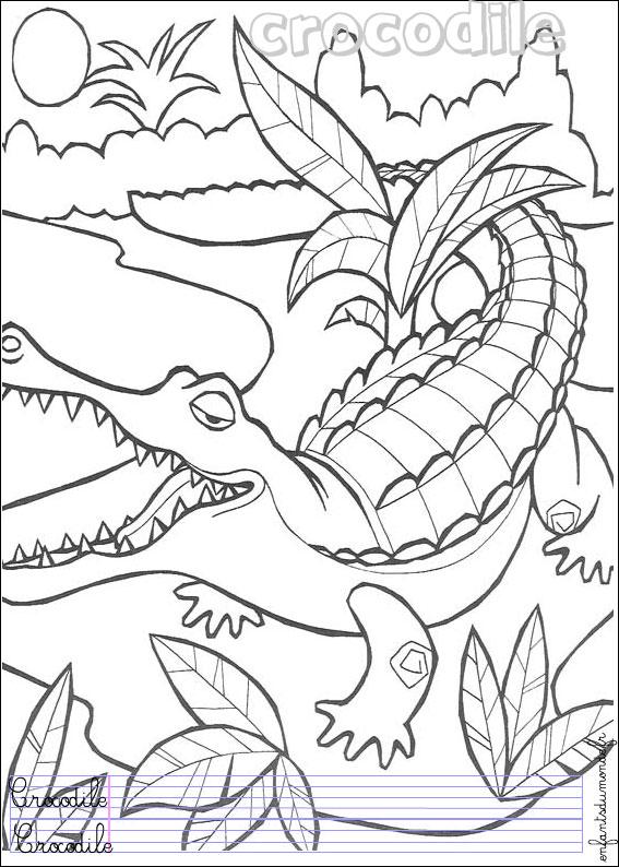 coloriage crocodile 1 .:. Coloriages Animaux de la jungle ...