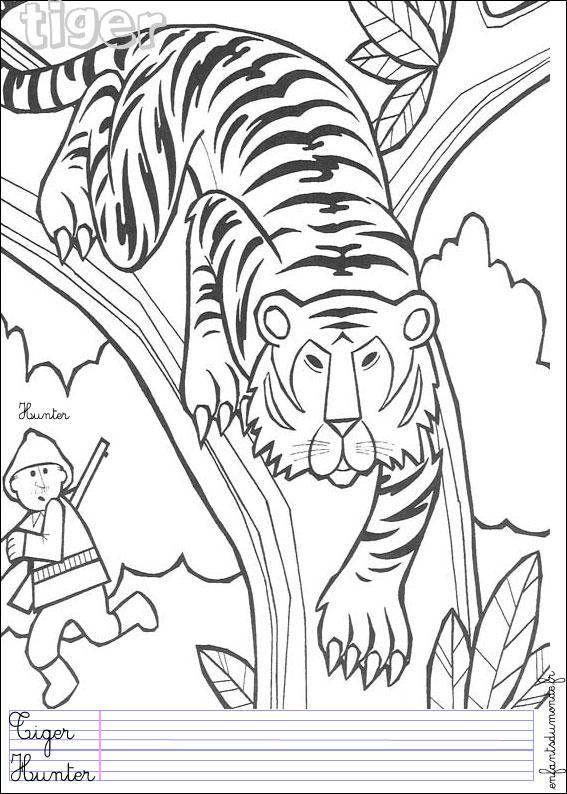 Coloriage Tigre 1 Coloriages Animaux De La Jungle En Anglais